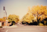 Palo Alto streets and trees, 1994