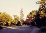 Palo Alto streets and trees, 1993